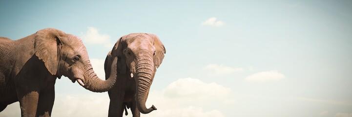 Papiers peints Elephant Composite image of wild elephants grazing on grassland