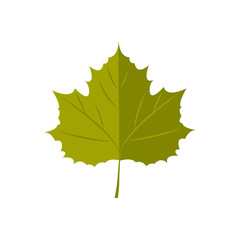 Vector Illustration. Autunm leaf
