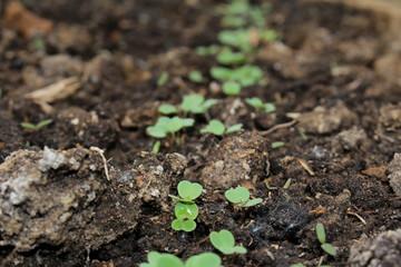 красивый зеленый росток который растет из земли