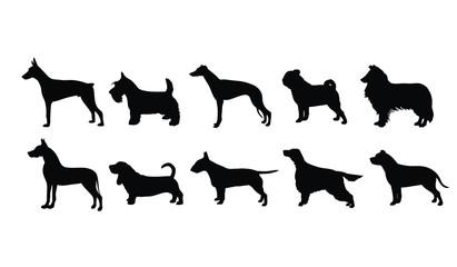 10 Dog Breeds 2