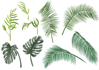Set green leaves of tropical plants: coconut palm, monstera, chamaedorea elegans (bamboo palm) on white background, digital draw greenery, watercolor style. Realistic vector botanical illustration