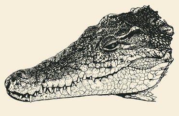 Head of a crocodile. Hand Drawn Character. Vector Illustration.