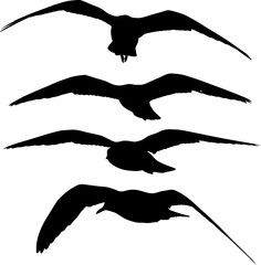 set of four flying seagull black silhouettess