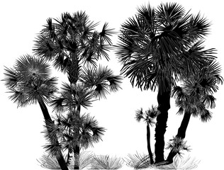 silhouette of palm trees large group on white