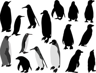 sixteen penguins isolated on white