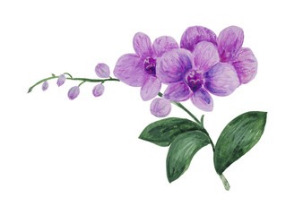 Watercolor, stylized orchid with three flowers and buds on the peduncle, gently lilac for romantic songs on the theme of the wedding.