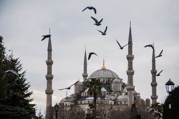 Birds flying over Blue Mosque in Istanbul, Turkey