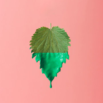 Green nettle leaf with dripping paint on bright pink pastel background. Minimal nature concept.