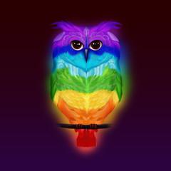 owl, rainbow, сова, радуга