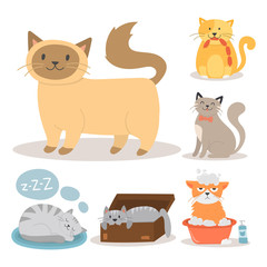 Portrait cat animal pet cute kitten purebred feline kitty domestic fur adorable mammal character vector illustration.