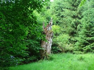 Urwald, Urwaldsteig Edersee