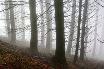 Silhouettes of tree trunks and branches in a forest by a foggy day in the french countryside.