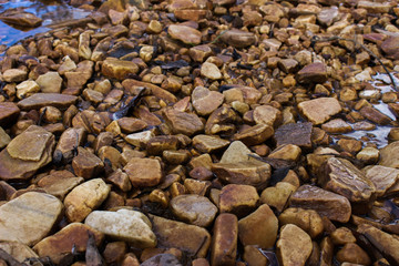 Stones from the river bottom