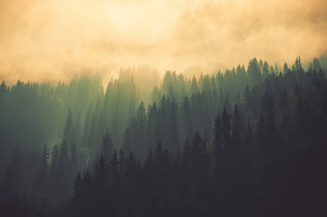 Forêt de montagne
