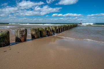 morskie ptaki siedzące na drewnianych falochronach na morzu bałtyckim