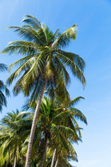Palm trees in front of deep blue sky