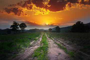 Country road with sunset
