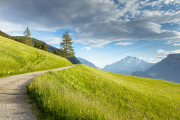 Fototapete - Bergstraße durch eine Almwiese in den Alpen
