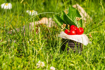 Red cherries in vintage tin in high grass