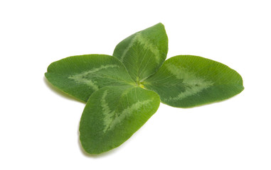 green clover leaf isolated
