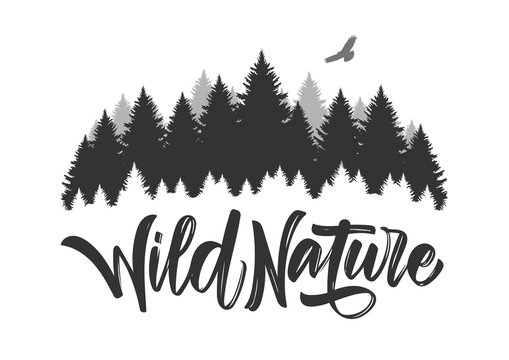 Vector illustration: Hand drawn type lettering of Wild Nature with silhouette of Pine Forest and Hawk.