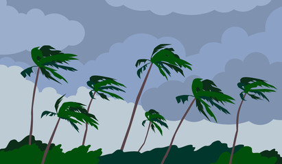 palm trees hurricane storm landscape