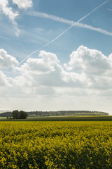 Big fields of yellow rapeseed and the blue sky with clouds