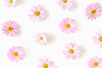 Pattern from flowers of pink daisy isolated on white background, flat lay, top view. The concept of spring.