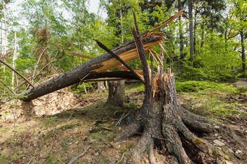 Windbruch im Wald Sturmschaden