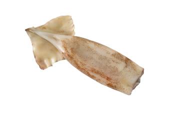 Squid Tubes.