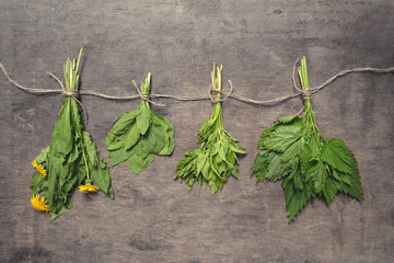 Assorted hanging bunches of spring edible wild herbs: nettle, dandelion, goutweed, plantain.