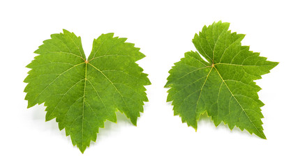 Fototapete - green grape leaves isolated on white background