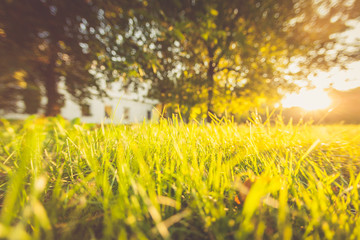 Summer, grass green, sunlight, boke, abstract landscape