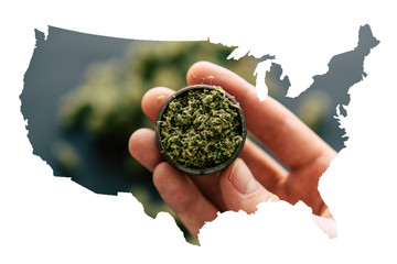 Cannabis Bud in the United State of America, Legal Marijuana in America. in hand a grinder to grind marijuana weed against a background of flowers of cannabis and scales and joint top view