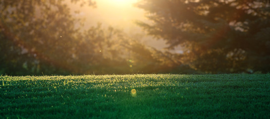 A horizontal presentation of the sun setting through the trees on a grassy meadow.