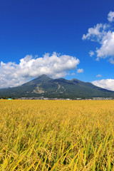 稲穂と磐梯山(福島県・猪苗代町)