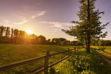 Weide bei Sonnenuntergang