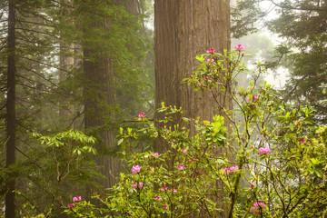 Springtiime iin Redwood National Park
