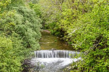 Bosque de ribera y salto de agua en el Río Bayo. Reserva de la Biosfera del Valle de Laciana, León, España.