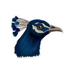 Peacock s head with crest. Beautiful wild bird with bright blue feathers. Detailed flat vector element for poster or flyer of zoo park