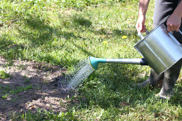 moistening the soil in hot weather/ gardener watering the future bed of a tin can in the garden