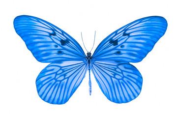 Большая бабочка с голубыми прозрачными крыльями, с прожилками, изолирована на белом фоне