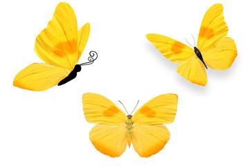 Три бабочки с жёлтыми крыльями и оранжевыми пятнам, изолирована на белом