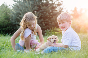 Adorable boy and girl playing in summer park with their Golden Cocker Spaniel puppy dog wile sitting together on the grass. Kids and animals friendship concept. Sun glare effect.
