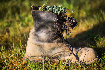 old shoe in the meadow with flowers planted