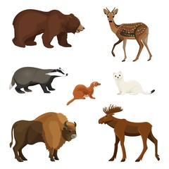 Forest animals with fluffy fur, predators and herbivorous set