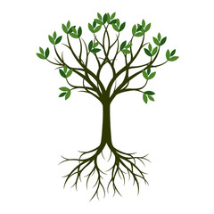 Green Spring Tree with Root. Vector Illustration.