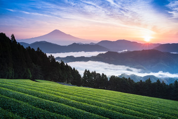 Mount Fuji and tea fram with morning sea of mist