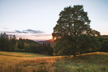 Schwarzwald in Abendsonne