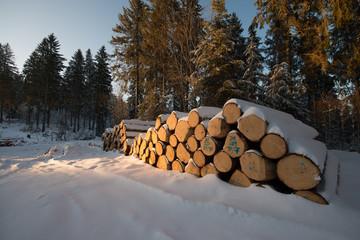 Holzgewinnung Schwarzwald